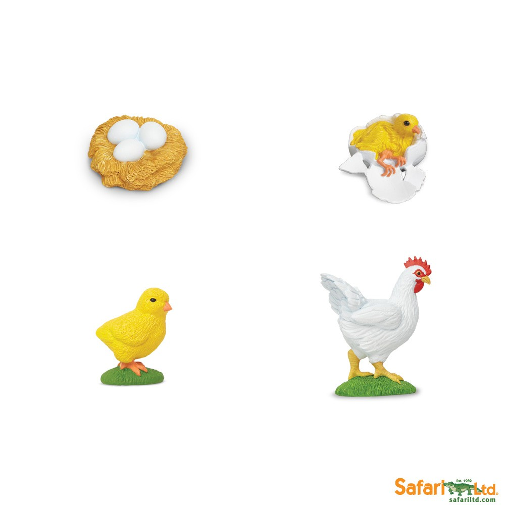 Life cycle of a chicken best educational infant toys stores life cycle of a chicken robcynllc Choice Image
