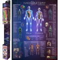 Popar Augmented and Virtual Human Anatomy Smart Chart